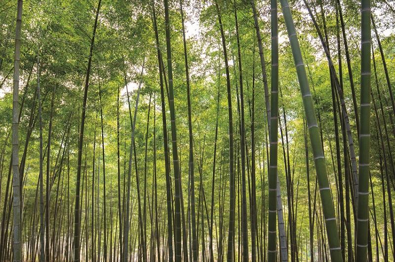 美しい中国 益陽 町の富培った竹...